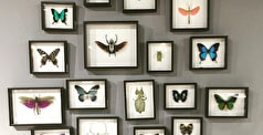 A Guide to Collecting Art: Framing, Hanging & Caring for Artwork