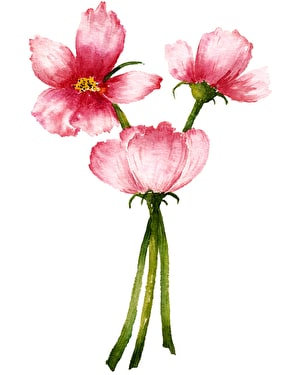 Introduction to watercolour: painting flowers