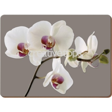 Creative Tops Orchid Harmony Pack Of 6 Premium Placemats
