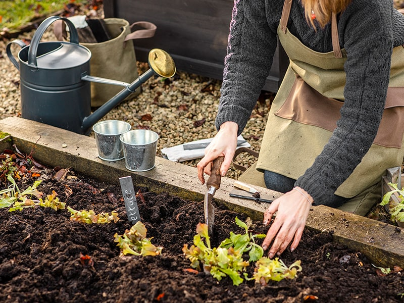 woman planting in veggie patch wearing apron and using kneeler