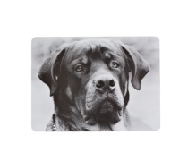 Kitchen Craft Dog Cork Back Laminated Set of 4 Placemats