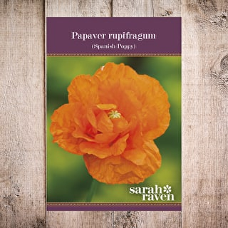 Papaver rupifragum 'Orange Feathers'