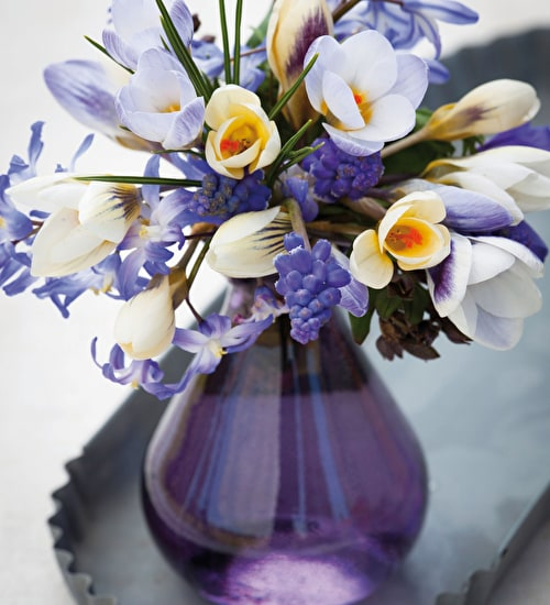 Ice Blue Crocus Collection