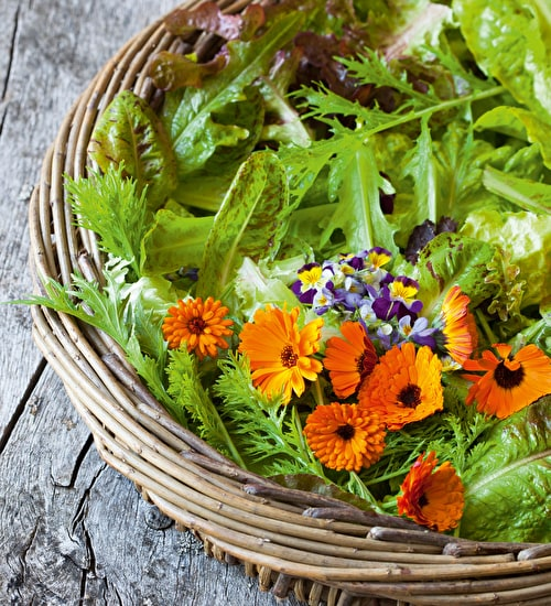 All Year Edible Flower Seed Collection