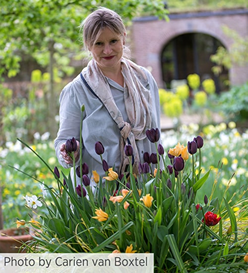 Carien van Boxtel on Bulb Carpets for Meadows, Woods and Lawns