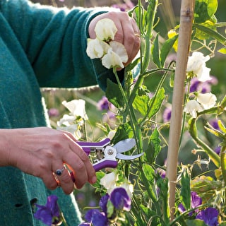 Head Gardener's Talks and Demonstrations