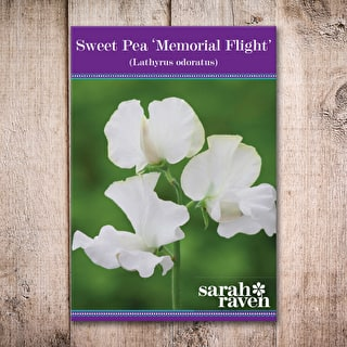 Sweet Pea 'Memorial Flight'