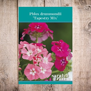 Phlox drummondii 'Tapestry Mix'