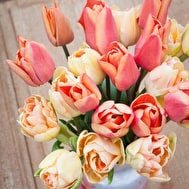 The Apricot Sorbet Tulip Collection