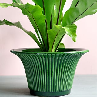 Green Daisy Pot