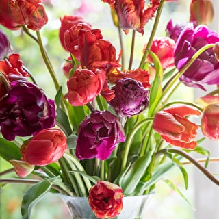 Fill Your Vases Tulip Collection
