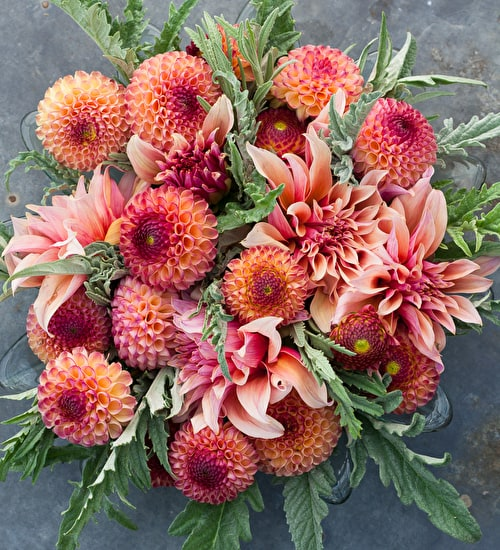 Honeycomb Dahlia Collection