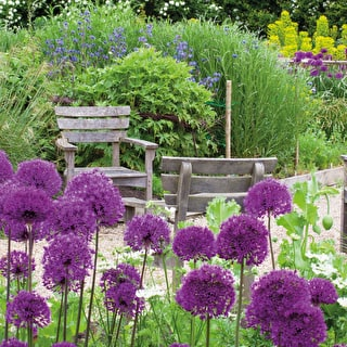 Fantastic Allium Collection