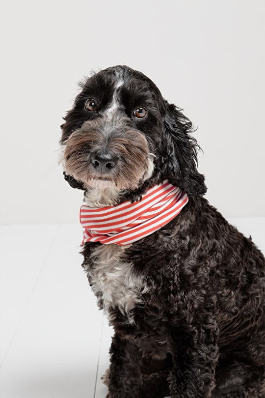 Dog Neckscarves. Seasalt Accessories for Four Legged Fashionistas