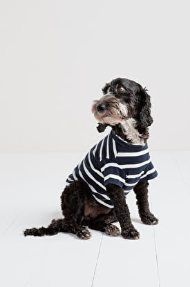 Dog Sailor Shirt