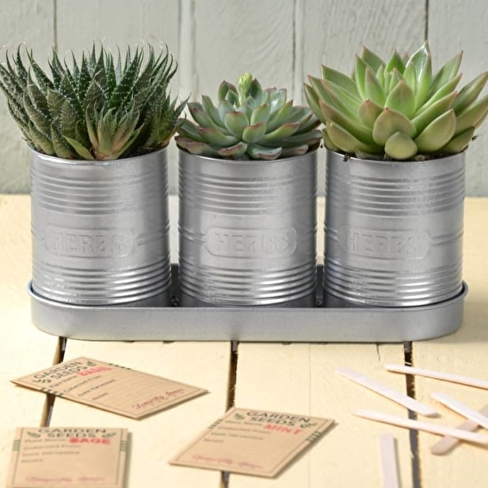 Set of Three Silver Herb Planters